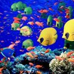 Єгипет, Червоне море